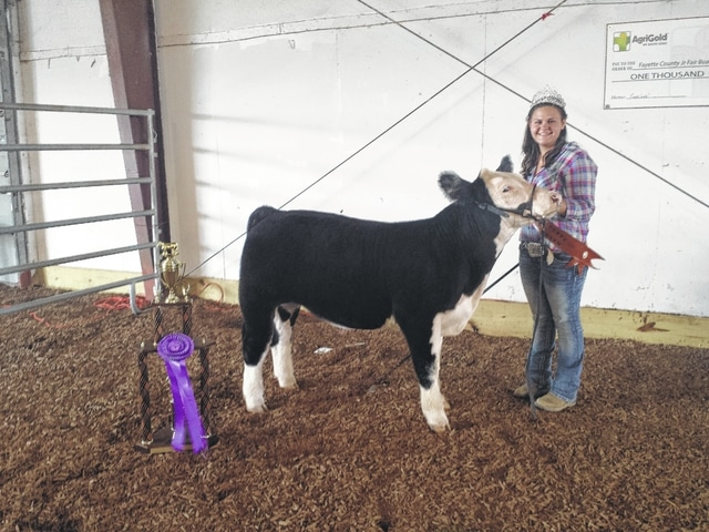 Sydney Miller's cow was named the 2015 Grand Champion Beef Feeder on Tuesday evening at the sales arena.