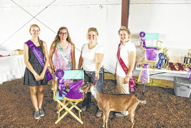 Kaleigh Swayne (second from right) was named the best overall showman for dairy goats at Tuesday's Junior Fair Goat Show.