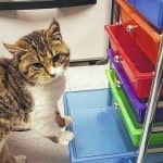 FHS Pet of the Week