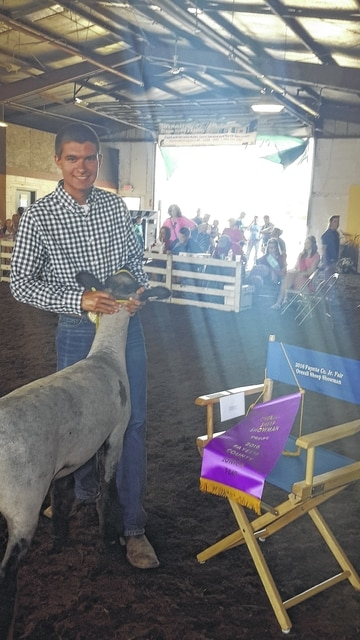 Cody Clyburn was named the overall sheep showman at the 2016 Fayette County Jr. Fair.