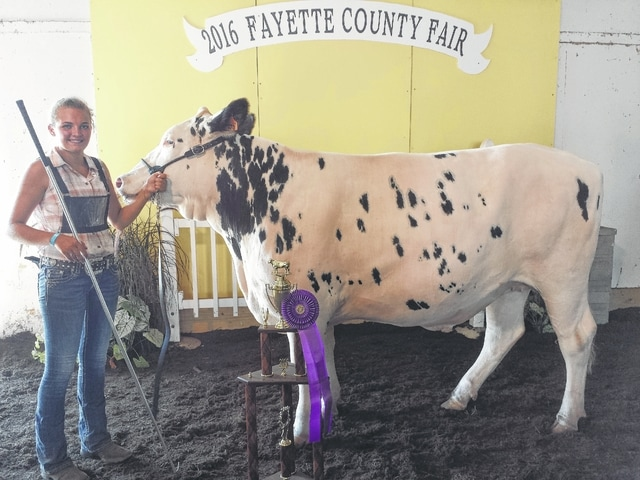 The 2016 Jr. Fair Dairy Steer Show was held on Wednesday afternoon and after a morning of wins, Kaitlyn Taylor's project was named grand champion dairy steer.