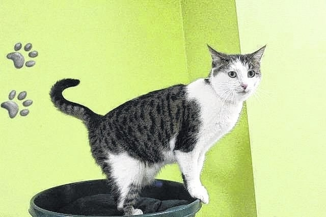 """Mrs. Wallace"" is one of many cats waiting for their new home at the adoption center."