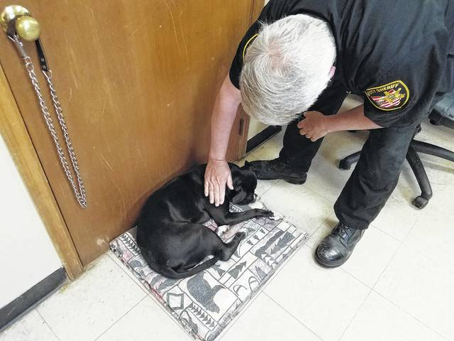 Fayette County Dog Warden Bruce Denen comforts Roxie who was recently struck by a vehicle and will require special surgery to help with her hip injury. The staff of the Fayette County Dog Shelter said they hope the community can help with her surgery, which she is scheduled to have on Wednesday.