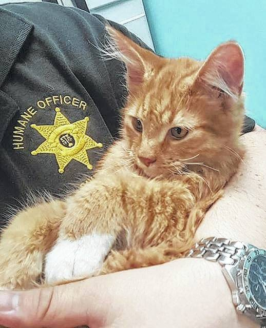 Thunder (pictured) and his siblings, Lightening, Cloud, and Raine were examined and given their vaccinations by veterinary technician Danyel Bageant and adoption coordinator Bobbi Honicker after they were in an accident over the weekend and given to the Fayette County Humane Society to be adopted.