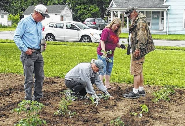 RACC gardeners and Fayette County Master Gardeners plant cabbage. Pictured (L to R): Peter Torgerson, Pam Anderson, Greta Blake, and Dean Groves.