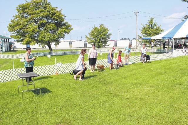 This year, the junior fair dog show participants were judged between the sales arena and the fair's back entrance.