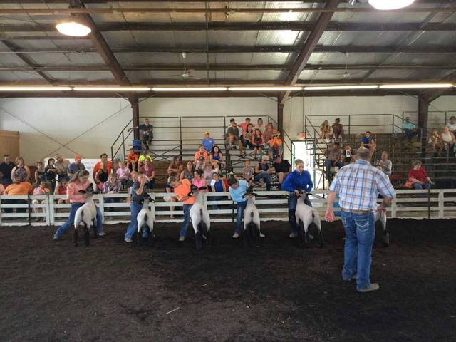 Each of the top class winners in each showmanship class returned to the show ring for judging in the overall sheep showman contest.
