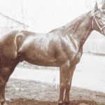 Looking Back: A Fayette County stallion remembered