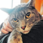 Fayette Humane Society Pet of the Week