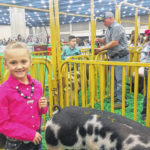 Alli Knecht shows hogs at livestock exposition