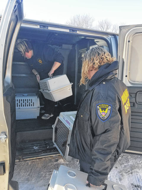 Humane agents in Wilmington loading the cats into their van.