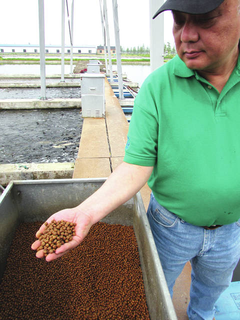 Jim Zhang of the U.S. Soybean Export Council, holds a handful of fish feed at an aquaculture facility on the outskirts of Shanghai, China in April, 2016. Rural Life Today editor Gary Brock toured the Chinese fish farm facility to see where much of Ohio's soybeans go when exported to China. The fish feed is made of about 50 percent soy meal.