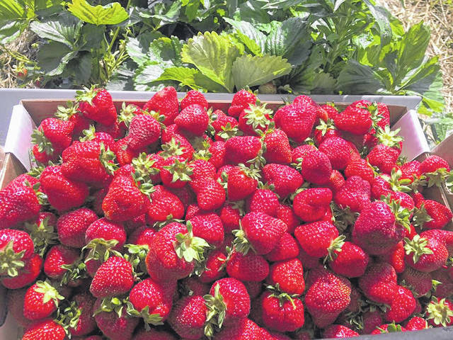 Strawberries from the 2017 Fayette County Farmers' Market. The 2018 version is set to begin Saturday, May 12.