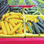 Summer squash is in season at Farmers' Market