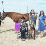Johnson named overall horse showman