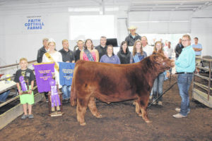 Grand champion steer sells for $5,000