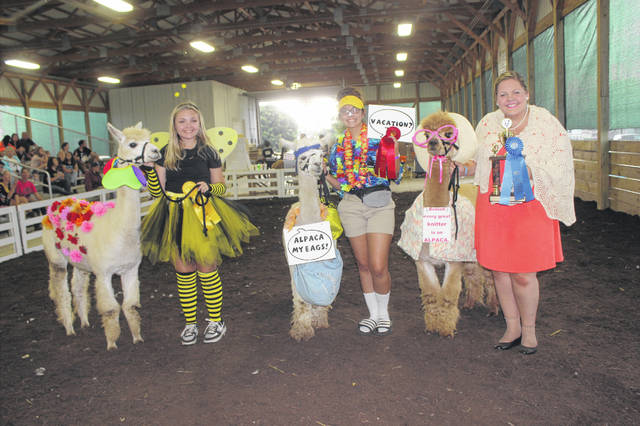 One of the final events of the 2018 Fayette County Fair was the first-ever Alpaca Costume Contest held on Saturday afternoon. Pictured are exhibitors and alpacas with their prizes after the first class (L to R): third place Macy Gruber and Bianca dressed as a bee and flowers, second place Morgan Leasure and Caiaphas dressed for their trip to the Bahamas, and the class winner Fayette County Alpaca Princess Ali Reeves and Jennie, the duo granny pair.